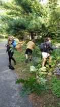 Youth weeding on the Greenway